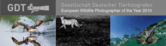 bruno rezende, coluna zero, fotografia, photo, concurso, foto, GDT, European Wildlife Photographer 2010