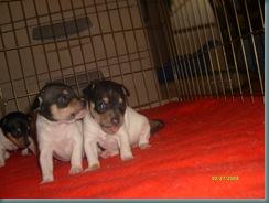 Jewel's puppies