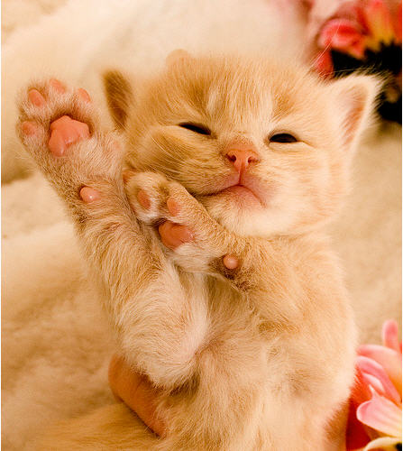 cute ginger kitten strike a pose dancing move