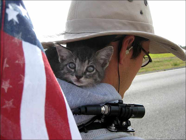 cute kitty adventurous kitten cat pic