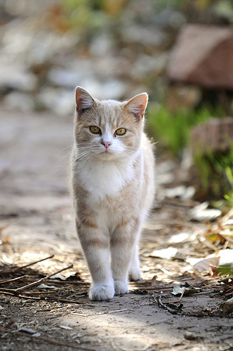 cute feral cat pic