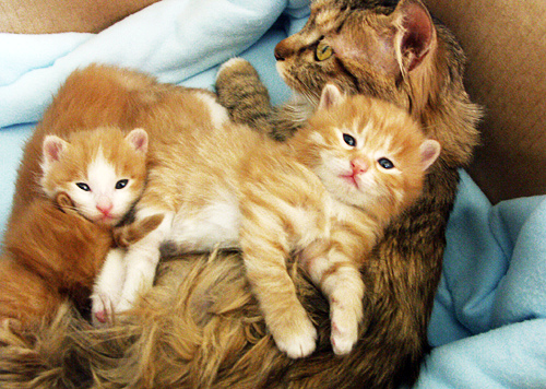 mother cat takes care of cute kittens pic