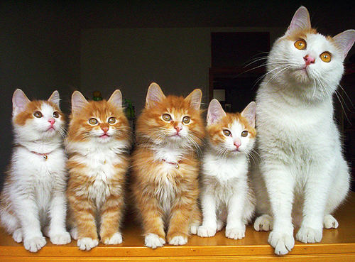 cute kittens and cat family portrait