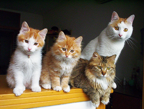 cute kittens curious cats pic