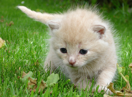 cute kitten playing on grass cat pic