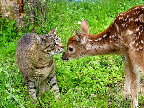 cute kitty nose bumping kissing deer cat pic
