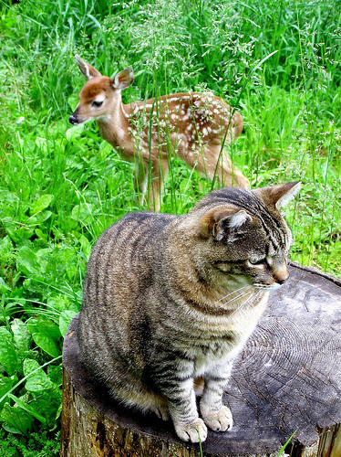 cute kitty and deer cat pic