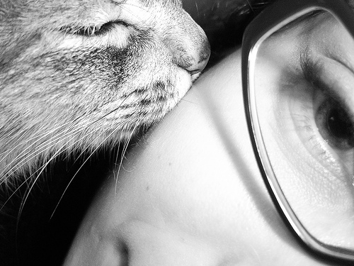 cute cat kisses girl kitten pic