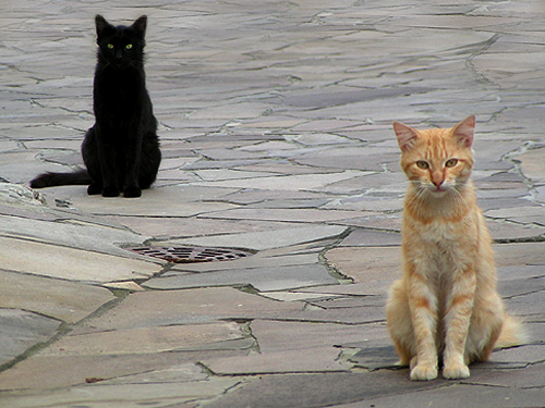 cute stray feral cats pic