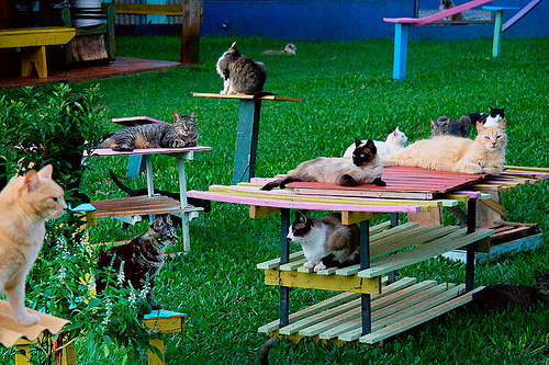 cute kittens cat sanctuary pic