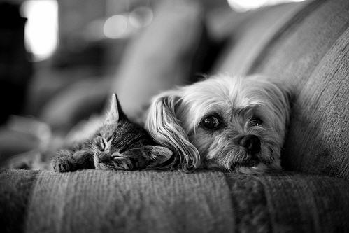 cute kitten and puppy sleeping cat pic