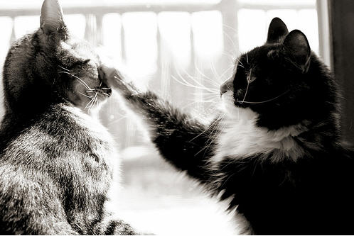 cute kittens fighting cat swat pic