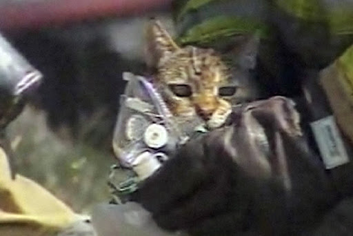 cat rescued saved from fire
