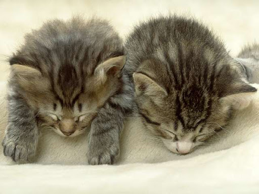 cute kitten napping cat pic