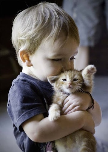cute kitten cat and baby pic