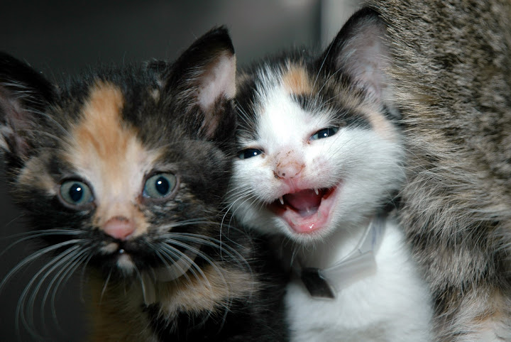 cute happy kittens smiley face cat pic