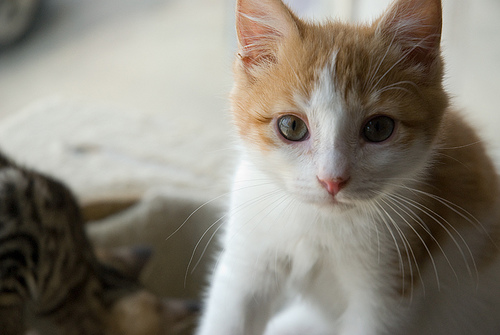cute shelter cat pic