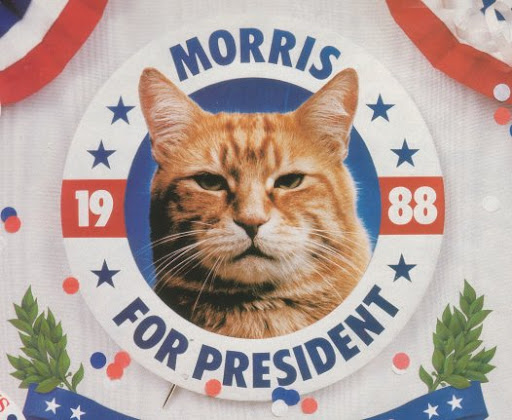 cute morris the cat presidential campaign