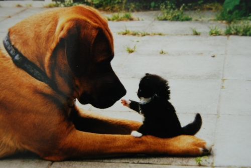 cute kitten pointing at dog unlikely friendship