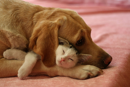 cute kitten napping with dog unlikely friendship pic