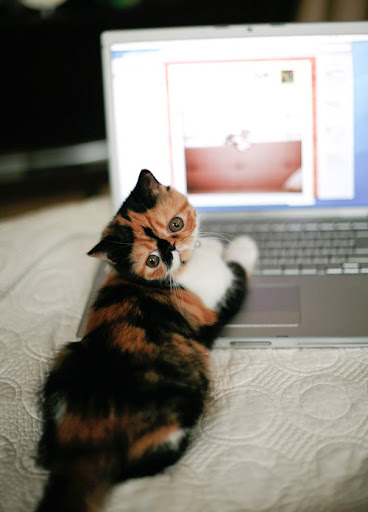 cute kitten using computer laptop