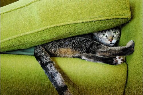 cute cat hiding under pillow cushion