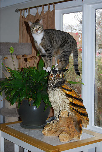 cute cat standing on owl statue