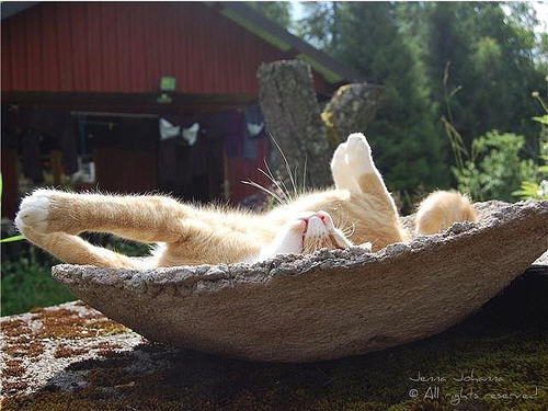 cute ginger cat napping under the sun
