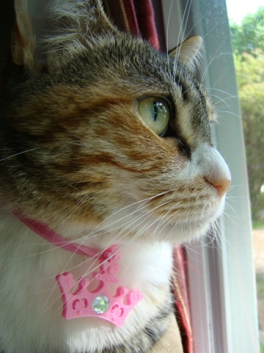 cute cat looking out window