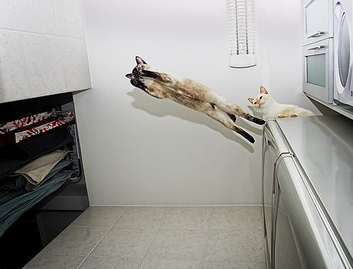 cute cat flying across kitchen