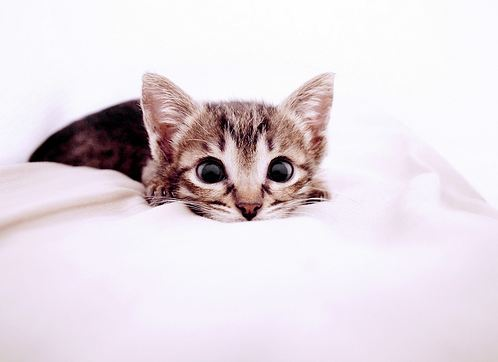 cute rescued kitten with big eyes
