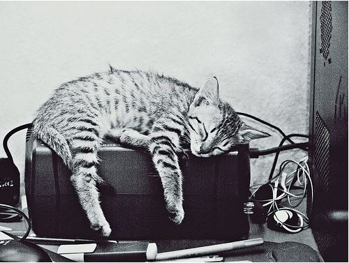 cute rescued kitten napping on USP heater