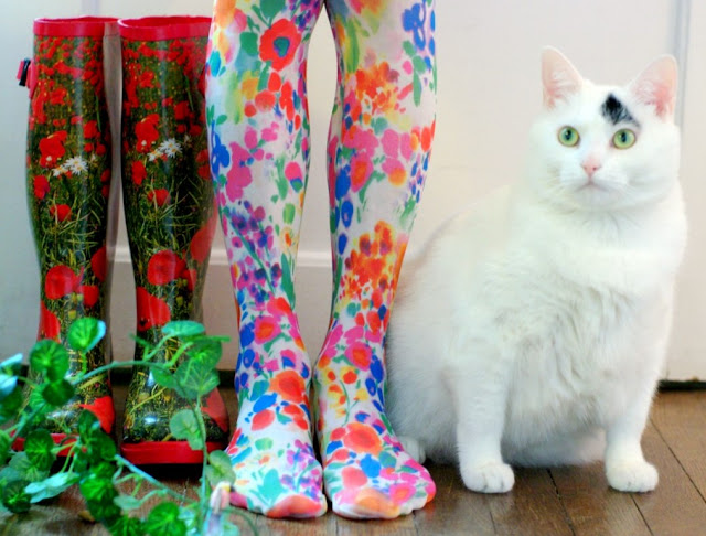 cute cat and colorful socks