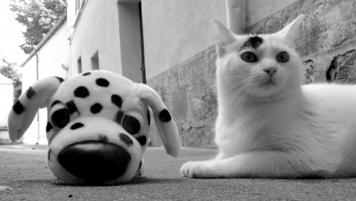 cute white cat and his look like plush dog
