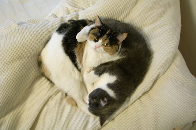 cute cats snoozing in a diamond shape