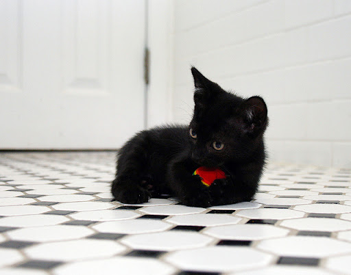 cute black kitten playing with a ball