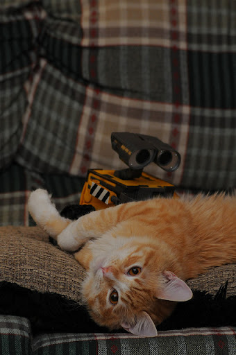 cute ginger cat and wall-e