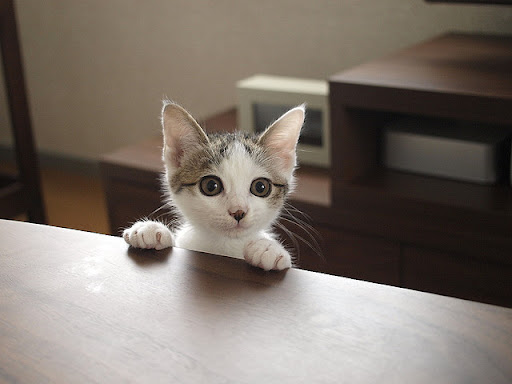 cute rescued kitten holding onto table