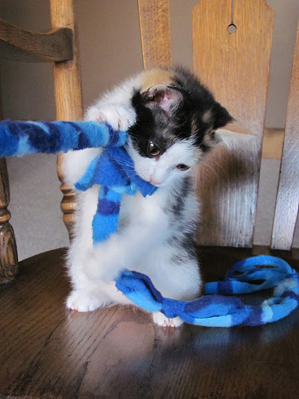 cute playful kitten playing with rope