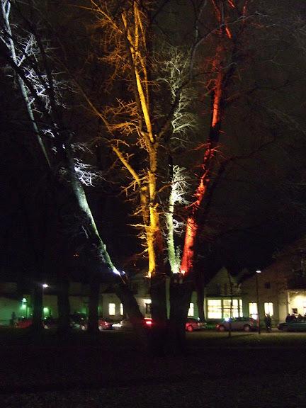 """""""Kärleksträdet"""" i kyrkparken...."""