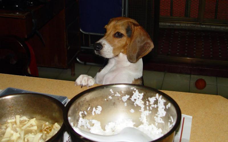 [Dog]貪吃鬼紅豆!
