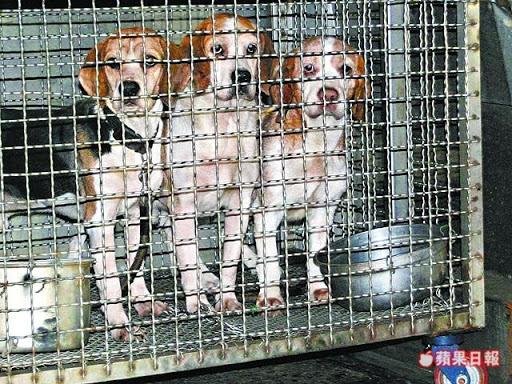 [Dog]狗狗沒有錯,他們只是餓壞了!