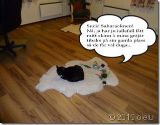 Katten Måns_edited