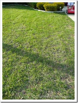 spring_grass_care