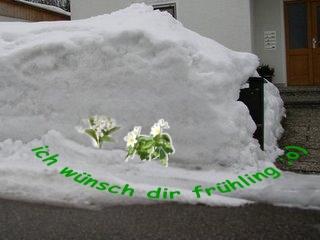 http://lh5.ggpht.com/_R0uv6LsOyB8/Sbeu8FmB7bI/AAAAAAAACNQ/zb7zDuTLZ7M/fruehling.jpg
