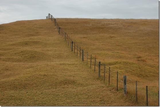 Glenample paddocks
