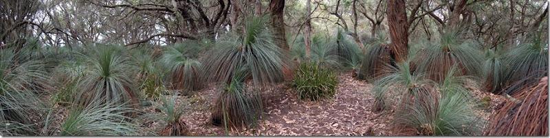 Annie's bush