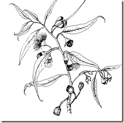 Intro to Botanical Illustration - Pamela Knight
