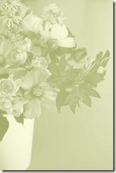 Mitty's flowers 7