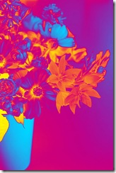 Mitty's flowers 6